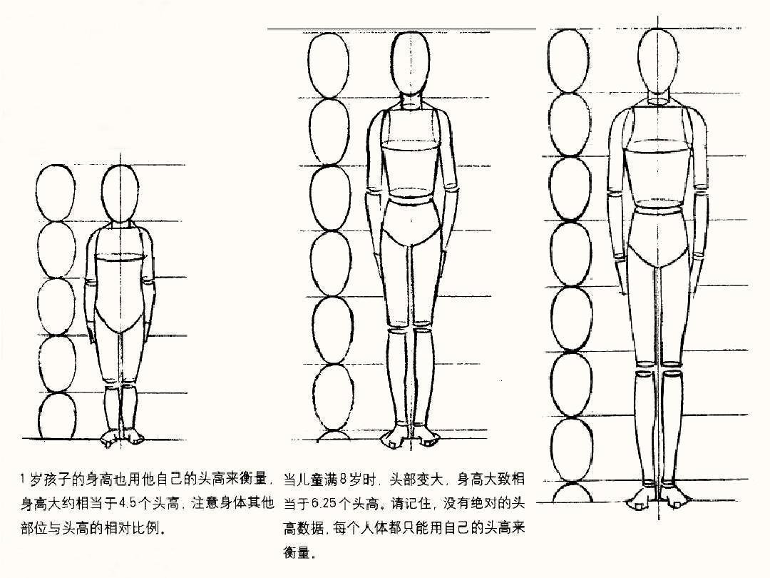人体比例_速写人体比例结构